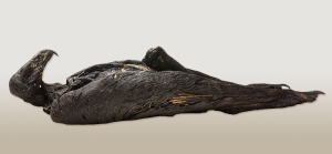 Mummified Eagle