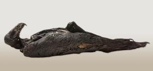 Mummified Eagle